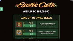Exotic Cats Payable