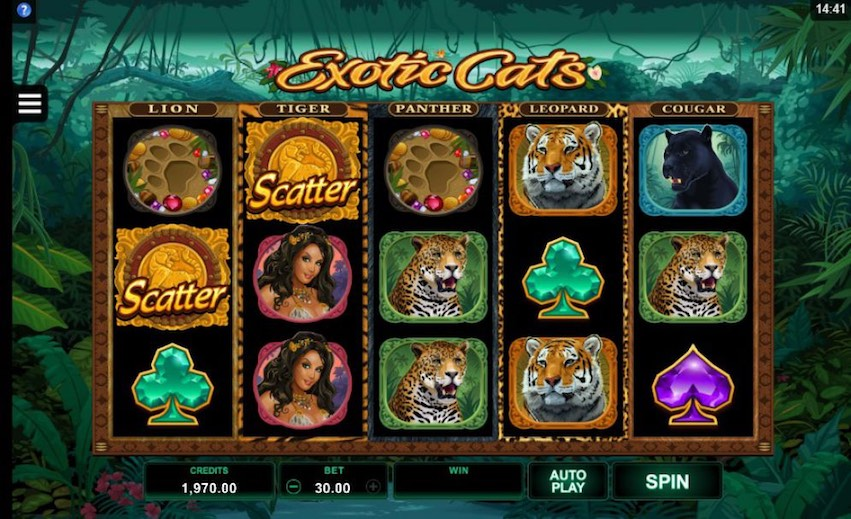 Exotic Cats Slot Review